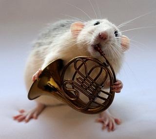 Загадки про мышку