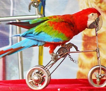 Загадки про попугая