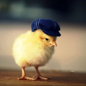Загадки про цыплёнка