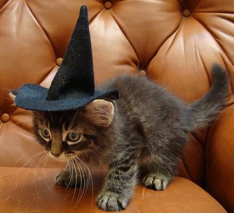Загадки про кошку