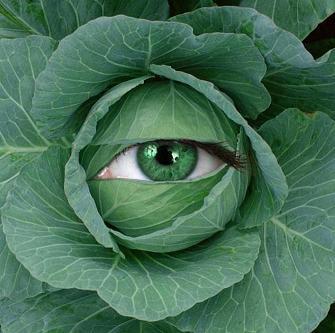 Загадки про капусту