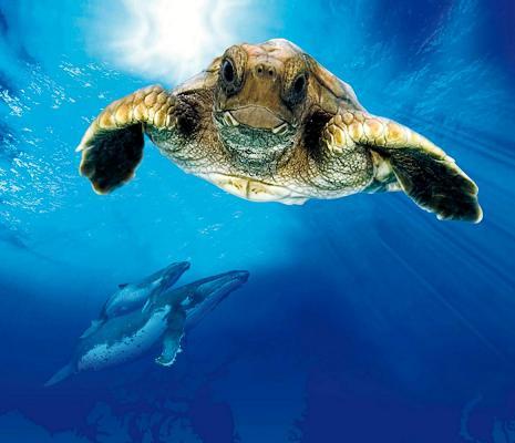 Загадки про океан