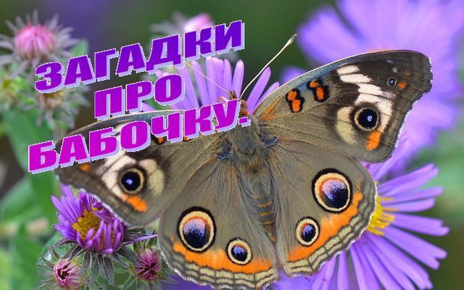Загадки про бабочку