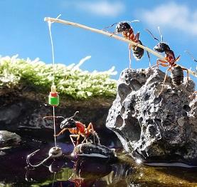 Загадки про муравья