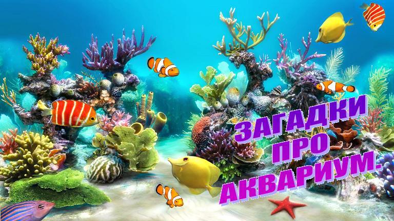 Загадки про аквариум