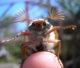 Загадки про жука