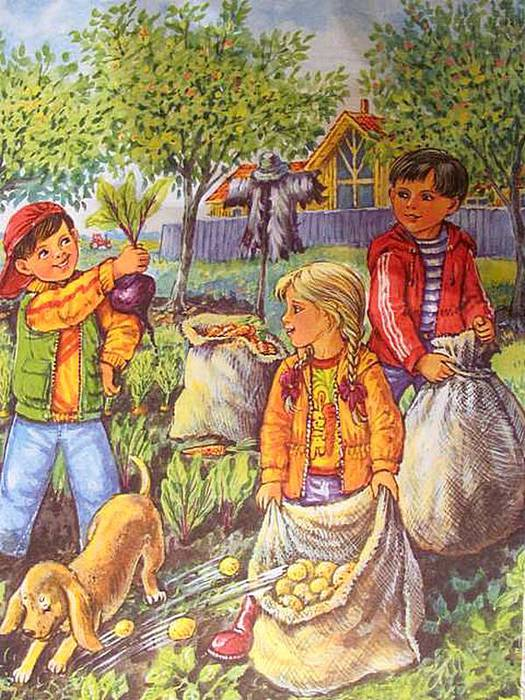 Картинка для детей собираем урожай
