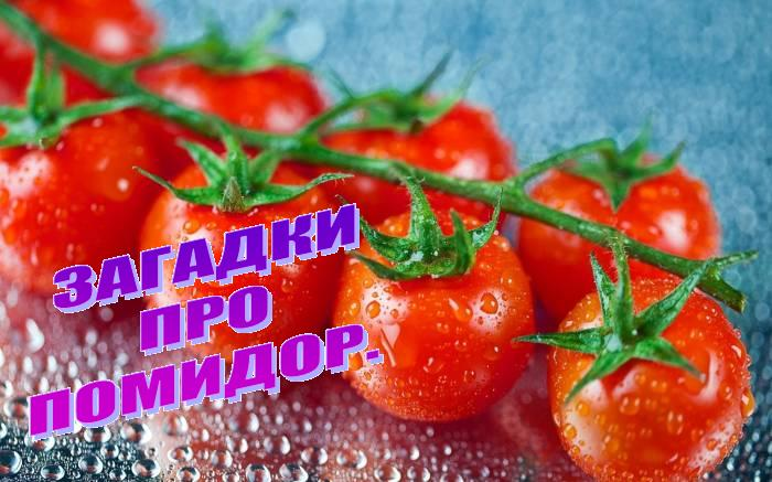 Загадки про помидор