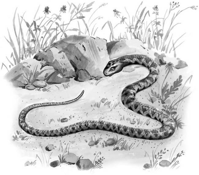 Голова и Хвост змеи